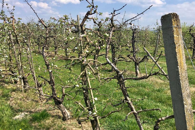 Tobias Ilg Spots and Sparks Apfelblüte in Denzlingen